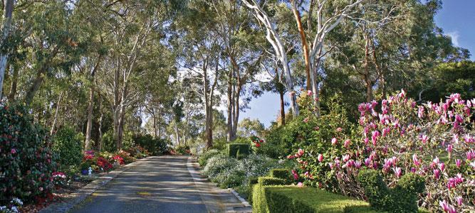 Doron's Garden