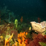 travel__0002_Bass Strait sponge garden 2